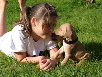 Love your ridgeback puppy